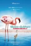 Flamingo01