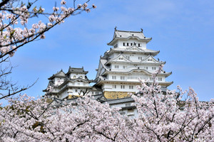 Himeji_cherry_blossom