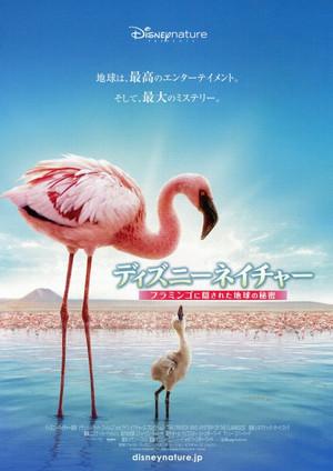 Flamingos2008_2